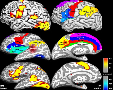 fMRI of the word reading and production nework